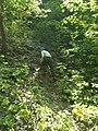 MD.RS - rezervația naturală silvică Stînca - apr 2018 - 06.jpg