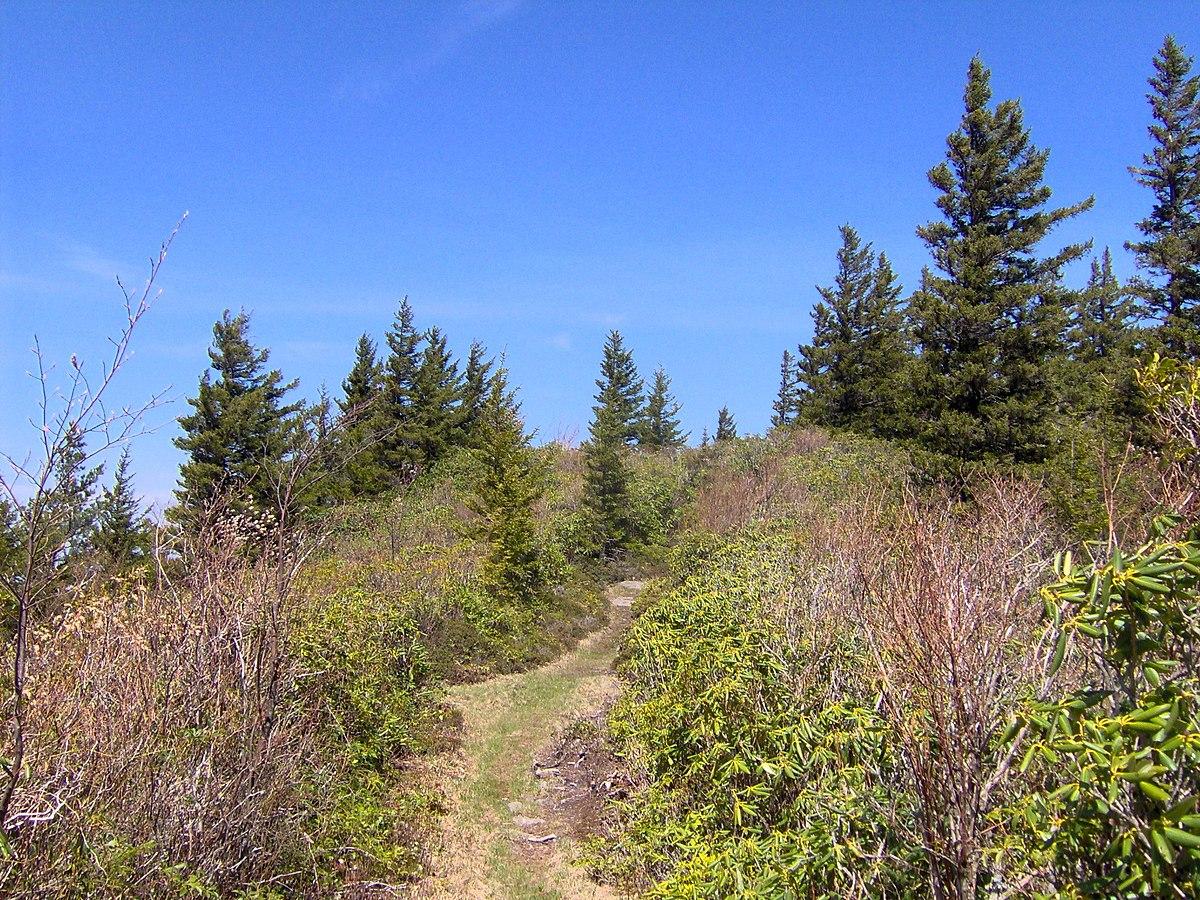 Maddron Bald Trail Wikipedia