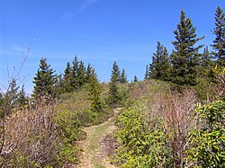 Maddron-bald-trail-heath1.jpg