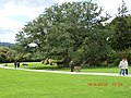 Majestic Tree in the Gardens at Killarney - panoramio.jpg
