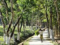 Man on Road at Malnicherra Tea Estate - Sylhet - Bangladesh (13007912923).jpg