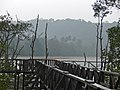 Mangrove Boardwalk under the rain (15214596224).jpg
