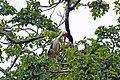 Manyara 2012 05 29 2186 (7482073978).jpg