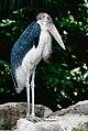 Marabou Stork Jurong.jpg