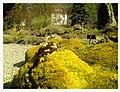 March Spring Botanischer Garten Freiburg - Master Botany Photography 2013 - panoramio (100).jpg