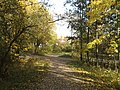 Marjaniemen Siirtolapuutarha - panoramio.jpg