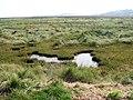 Marshland beside the path - geograph.org.uk - 980703.jpg