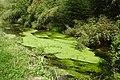 Massapequa Creek uncut 2021 (3) jeh.jpg