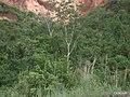 Mato Grosso, Brasil - panoramio (7).jpg