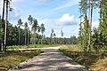 Meža ceļš, Vecumnieku pagasts, Vecumnieku novads, Latvia - panoramio.jpg