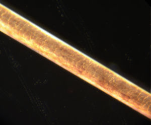 Human hair under 200-times magnification