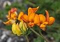 Modane - flower.jpg