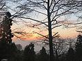 Moganshan sunrise.jpg