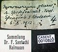 Monomorium springvalense casent0010822 label 1.jpg