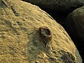 Moon rocks! (4435186982).jpg