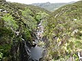 Moorland Stream flowing in little gorge - geograph.org.uk - 1359847.jpg