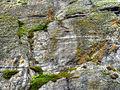 Mossy cracks (8045593478).jpg