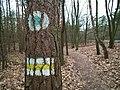Mount Moraska trails.JPG