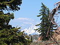 Mount Shasta from Trinity Alps.jpg