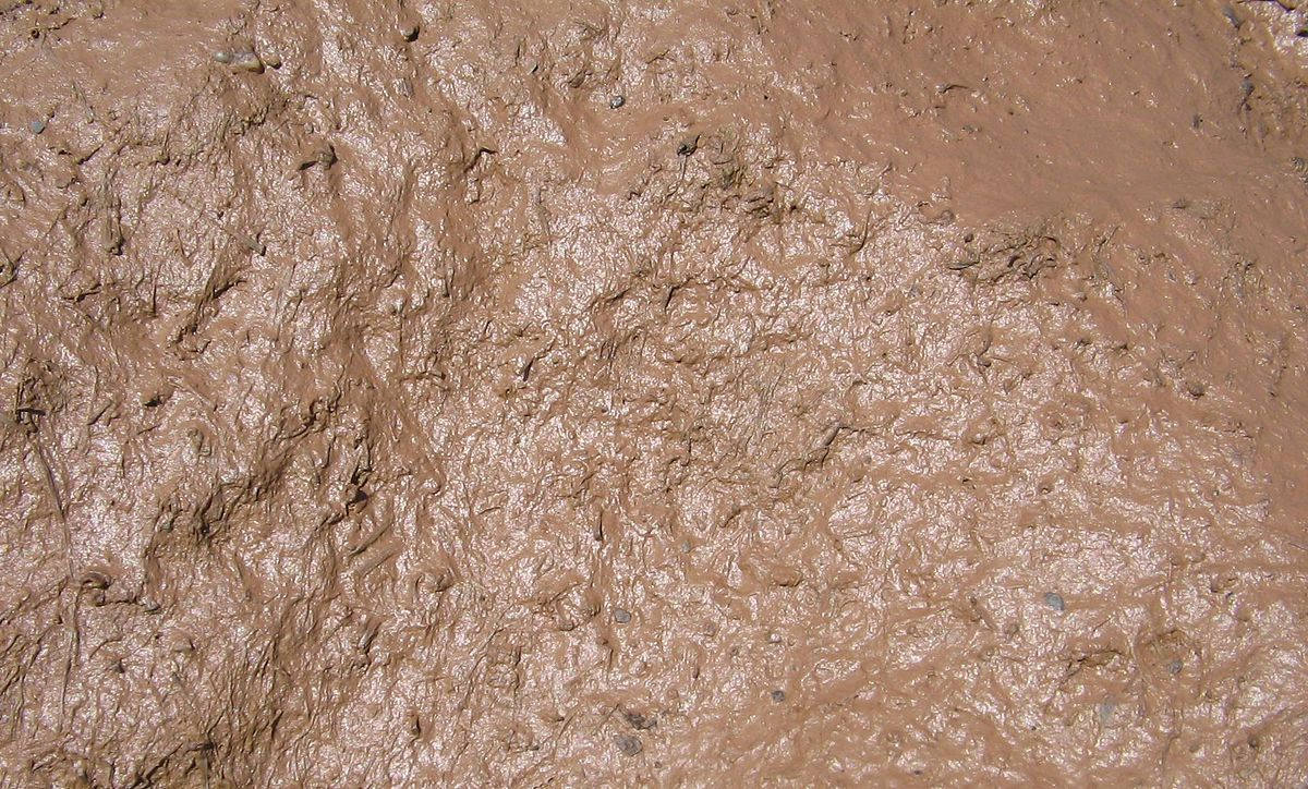 Mud simple english wikipedia the free encyclopedia for Different types of soil wikipedia
