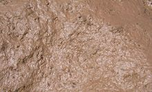 Mud closeup.jpg