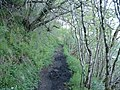 Muddy footpath - geograph.org.uk - 175751.jpg