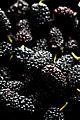 Mulberries. (5079404917).jpg