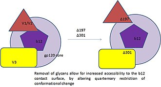Antigenic variation - steric occlusion in Env gp120 contributes to resistance by neutralization by monoclonal b12