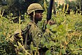 NARA 111-CCV-409-CC33199 101st Airborne soldier searching for Vietcong Operation Van Buren 1966.jpg