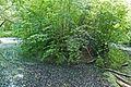 ND Nürtingen-Ehemaliger Neckaraltarm mit Auenwald 81160493224.jpg
