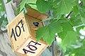 Nacen los primeros pollos en las cajas nido del paseo de la Castellana 04.jpg