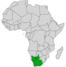 Cape Cobra Wikipedia
