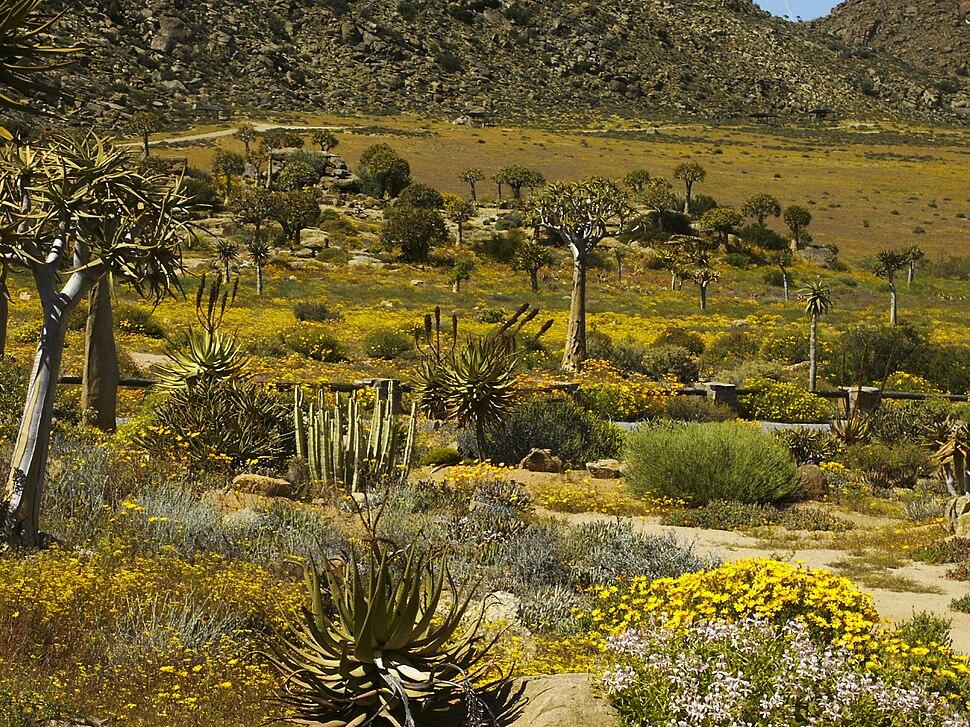 Namaqualand, Goegap 0035