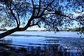 Nanhu Lake park - panoramio.jpg