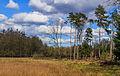 Nationaal Park Drents-Friese Wold. Locatie Dieverzand. Bosrand 03.jpg