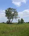 Nationaal Park Weerribben-Wieden. Bomengroep in gebied Weerribben.JPG