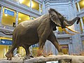 National Museum of Natural History, Washington, D.C. (2013) - 03.JPG