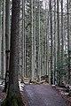 Nationalpark Bayerischer Wald 3.jpg