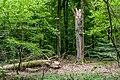 Naturbëschreservat «Beetebuerger Bësch»-113.jpg