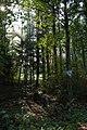 Naturdenkmal - Hartwald - geo.hlipp.de - 14034.jpg