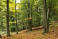 Nature reserve Vlčí důl in autumn 2014 (6).JPG