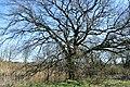 Naturschutzgebiet Haseder Busch - Am Altarm (14).jpg