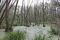 Naturschutzgebiet Zarth Mai 2017.jpg