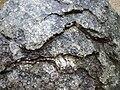 Neuschönau - Gesteins-Freigelände, Granit in Zwiebelschalen-Verwitterung.jpg