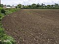 New crop by Back Lane - geograph.org.uk - 438602.jpg