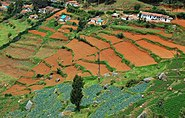 Nilgiris vegetable plantations
