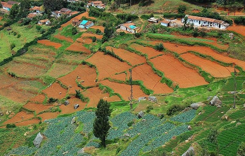 File:Nilgiris vegetable plantations.jpg