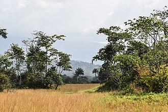 Mount Nimba Strict Nature Reserve - Image: Nimba savana