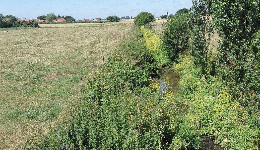 Watringue dans les prairies du Schoubrouck au sud de Noordpeene dans la réserve biosphère .- Nord-Pas-de-Calais.- France.
