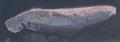 Norderney Landsat7.png